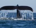 韓国は日本以上の捕鯨大国!?正直者の日本がバカを見たカラクリ