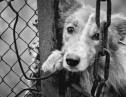 犬肉祭りは残酷?それとも食文化?中国人に対する世界の反応